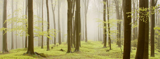 Image of forest in mist
